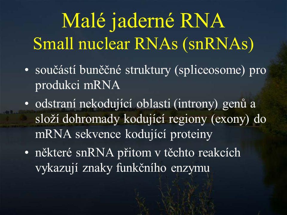 Malé jaderné RNA Small nuclear RNAs (snRNAs)