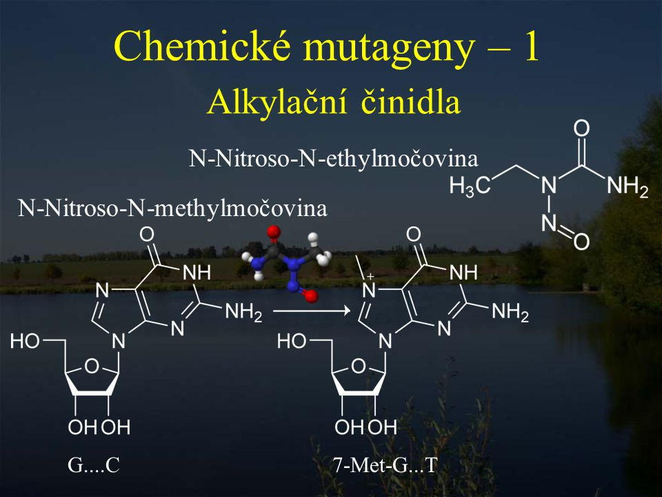 Chemické mutageny – 1 Alkylační činidla