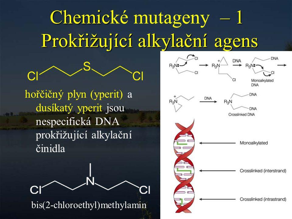 Chemické mutageny – 1 Prokřižující alkylační agens