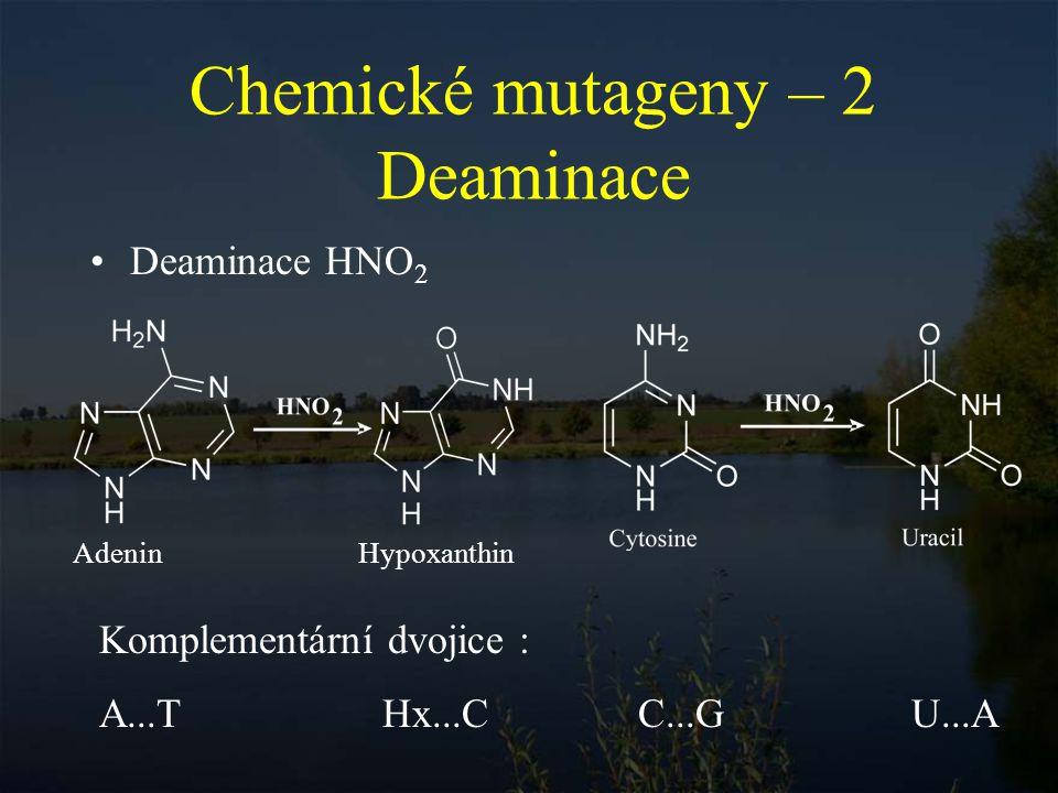 Chemické mutageny – 2 Deaminace