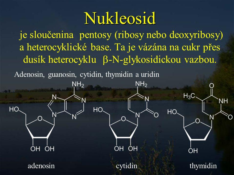 Nukleosid je sloučenina pentosy (ribosy nebo deoxyribosy) a heterocyklické base. Ta je vázána na cukr přes dusík heterocyklu -N-glykosidickou vazbou.