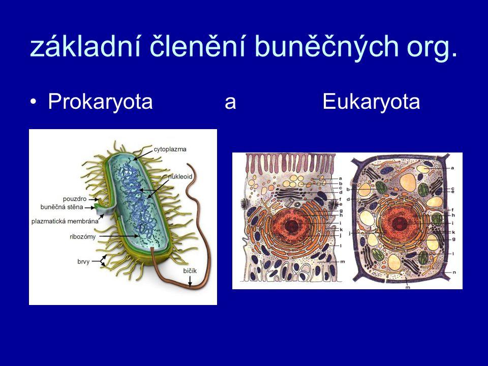 základní členění buněčných org.