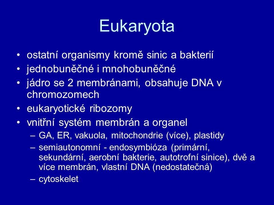 Eukaryota ostatní organismy kromě sinic a bakterií