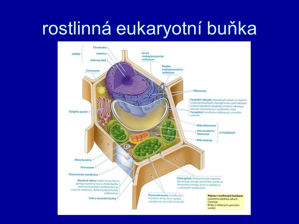rostlinná eukaryotní buňka