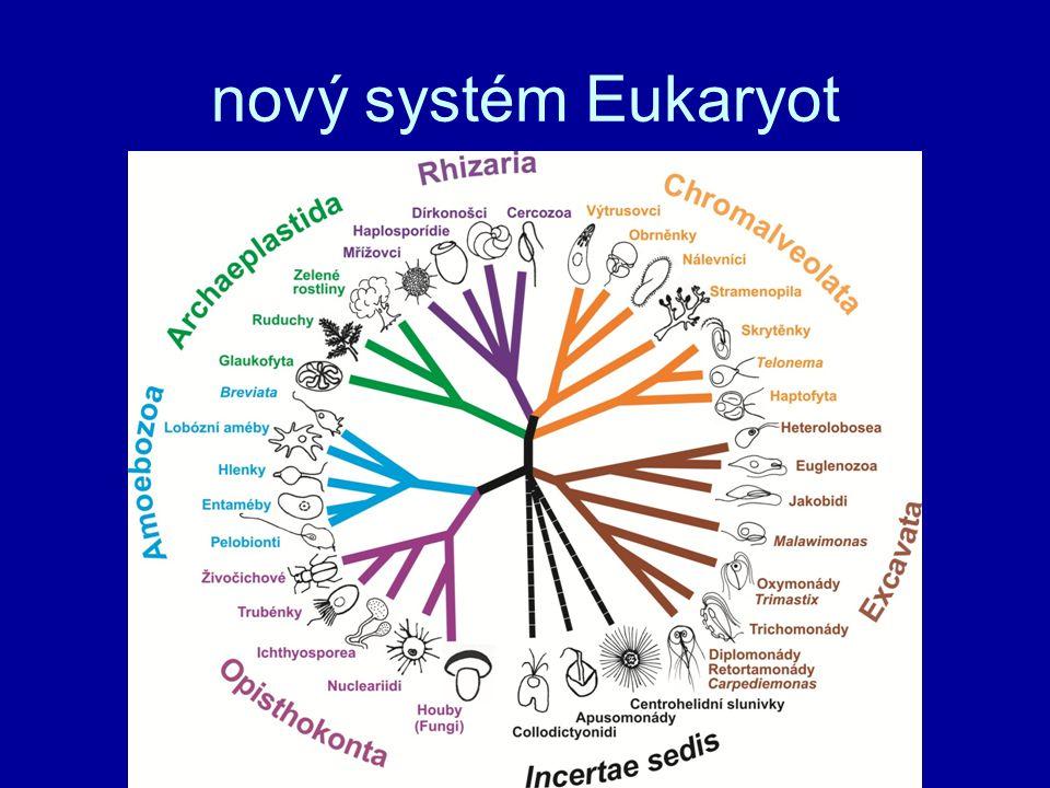 nový systém Eukaryot