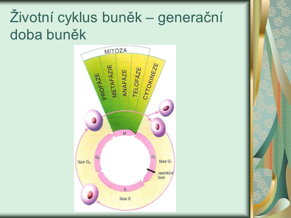 Životní cyklus buněk – generační doba buněk