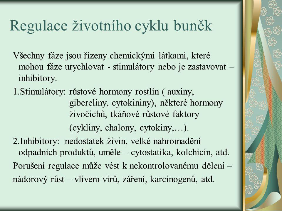 Regulace životního cyklu buněk
