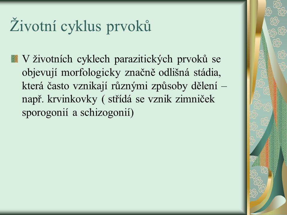 Životní cyklus prvoků