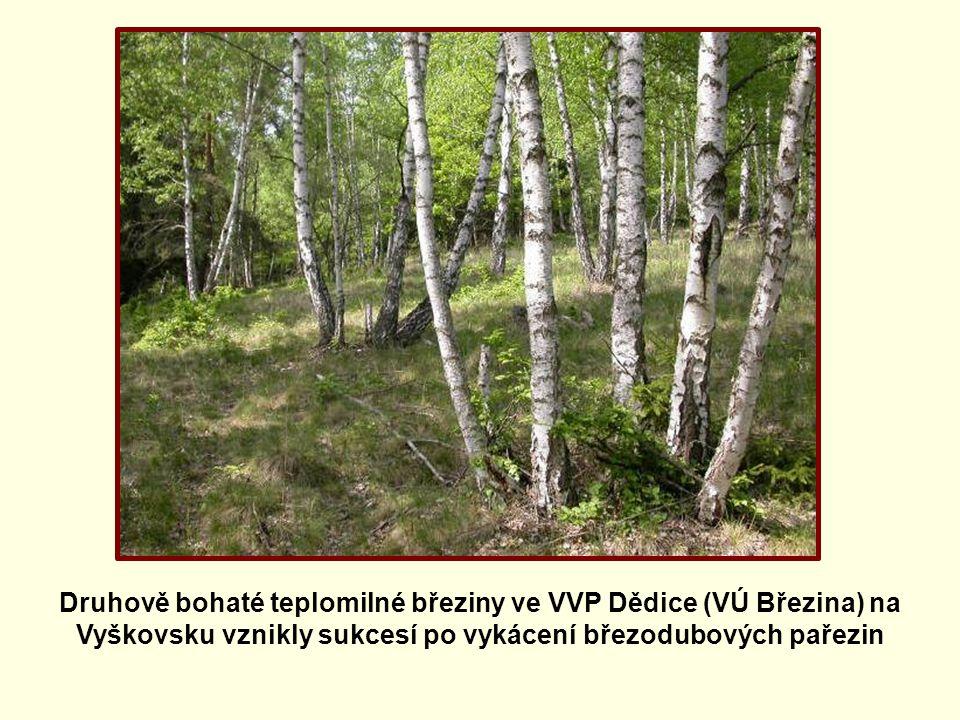 Druhově bohaté teplomilné březiny ve VVP Dědice (VÚ Březina) na Vyškovsku vznikly sukcesí po vykácení březodubových pařezin
