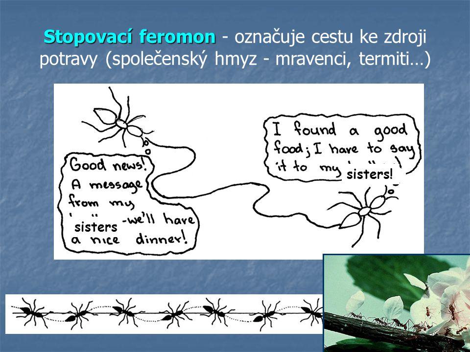 Stopovací feromon - označuje cestu ke zdroji potravy (společenský hmyz - mravenci, termiti…)