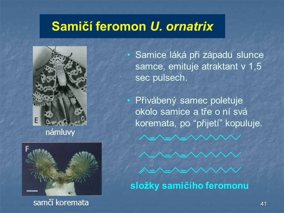 Samičí feromon U. ornatrix