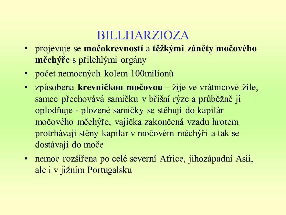 BILLHARZIOZA projevuje se močokrevností a těžkými záněty močového měchýře s přilehlými orgány. počet nemocných kolem 100milionů.