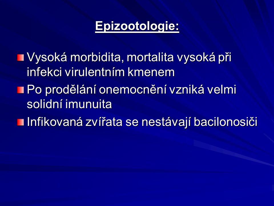 Epizootologie: Vysoká morbidita, mortalita vysoká při infekci virulentním kmenem. Po prodělání onemocnění vzniká velmi solidní imunuita.
