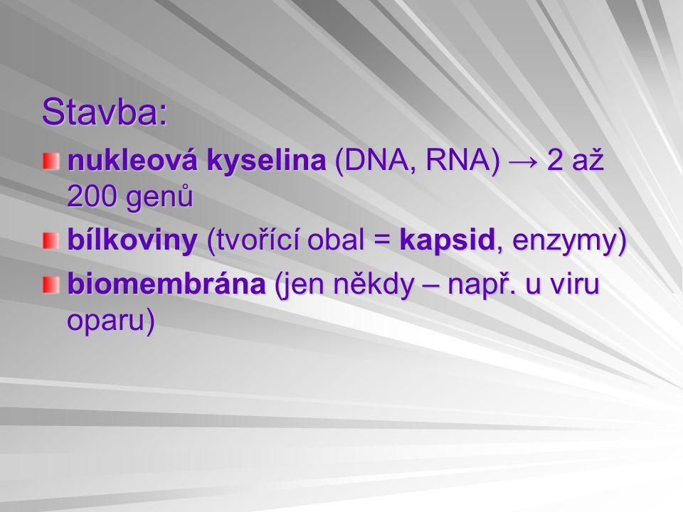 Stavba: nukleová kyselina (DNA, RNA) → 2 až 200 genů