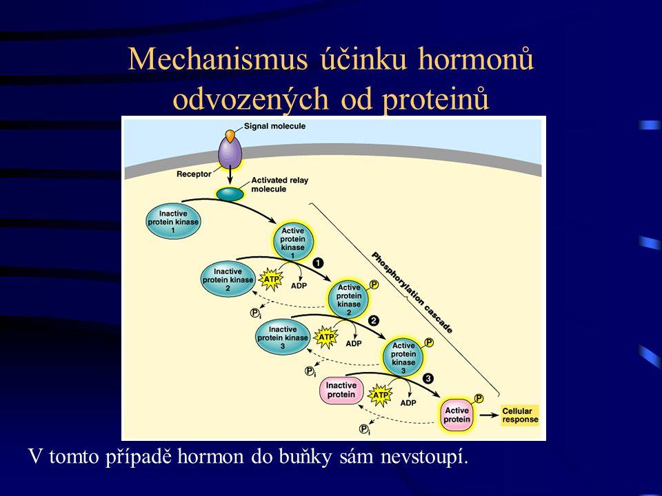 Mechanismus účinku hormonů odvozených od proteinů
