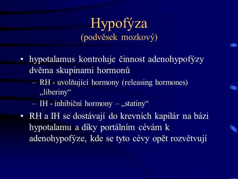 Hypofýza (podvěsek mozkový)
