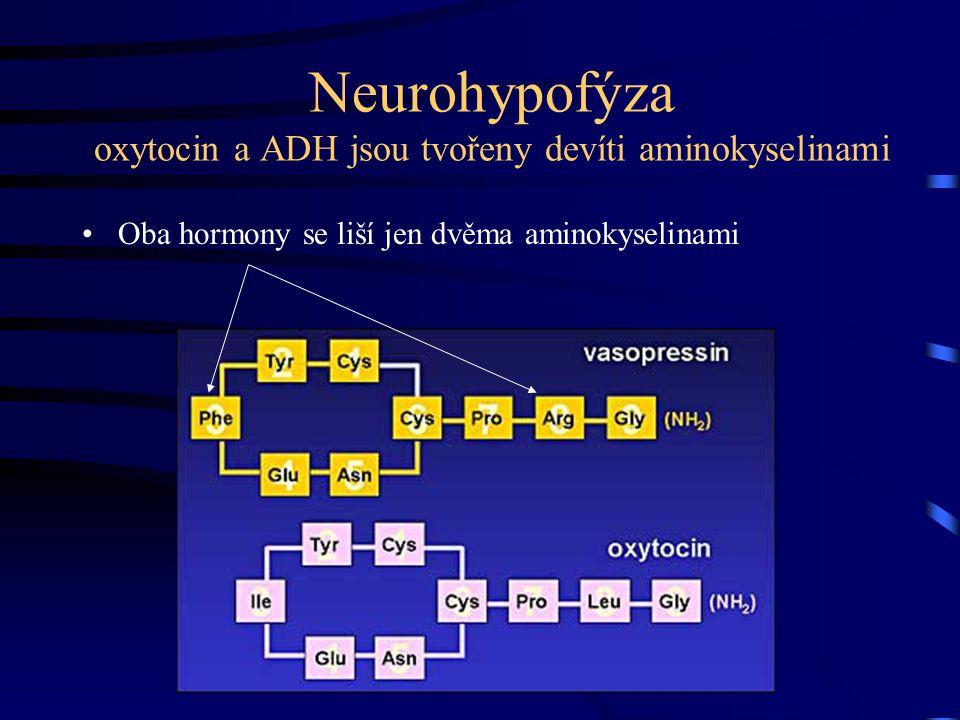 Neurohypofýza oxytocin a ADH jsou tvořeny devíti aminokyselinami