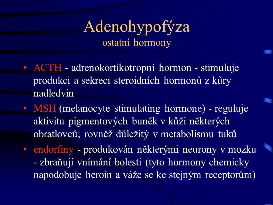 Adenohypofýza ostatní hormony