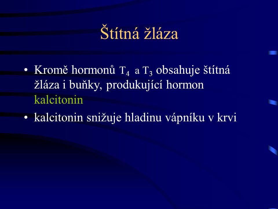 Štítná žláza Kromě hormonů T4 a T3 obsahuje štítná žláza i buňky, produkující hormon kalcitonin.