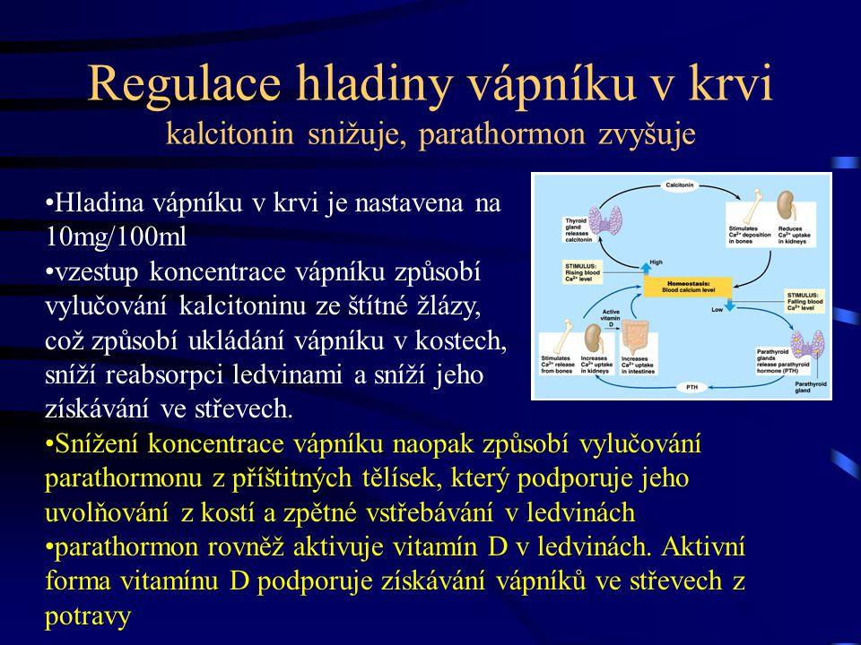 Regulace hladiny vápníku v krvi kalcitonin snižuje, parathormon zvyšuje