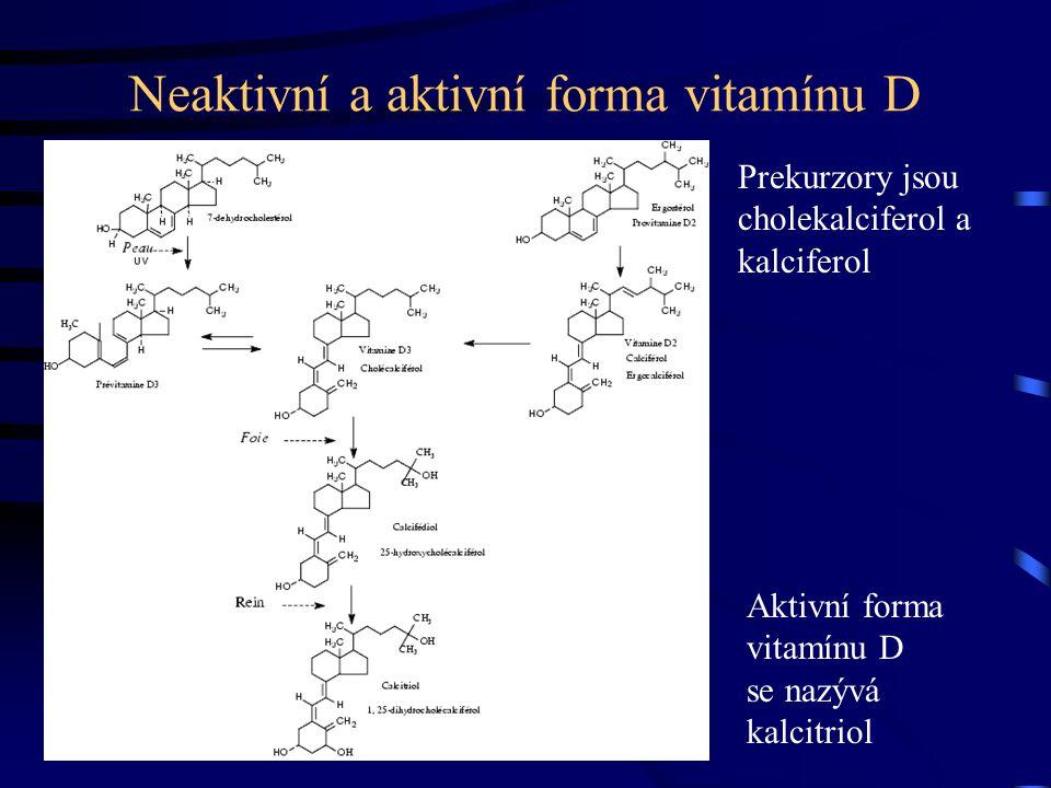 Neaktivní a aktivní forma vitamínu D