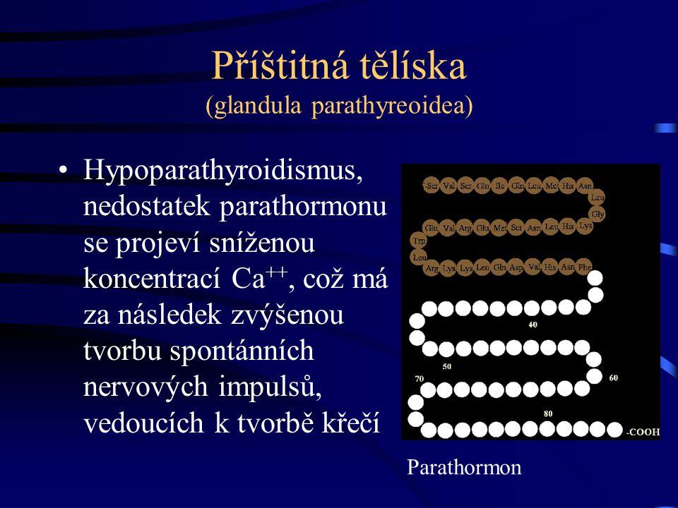 Příštitná tělíska (glandula parathyreoidea)