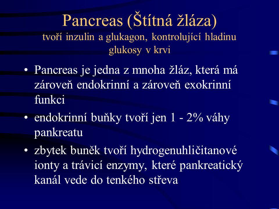 Pancreas (Štítná žláza) tvoří inzulin a glukagon, kontrolující hladinu glukosy v krvi