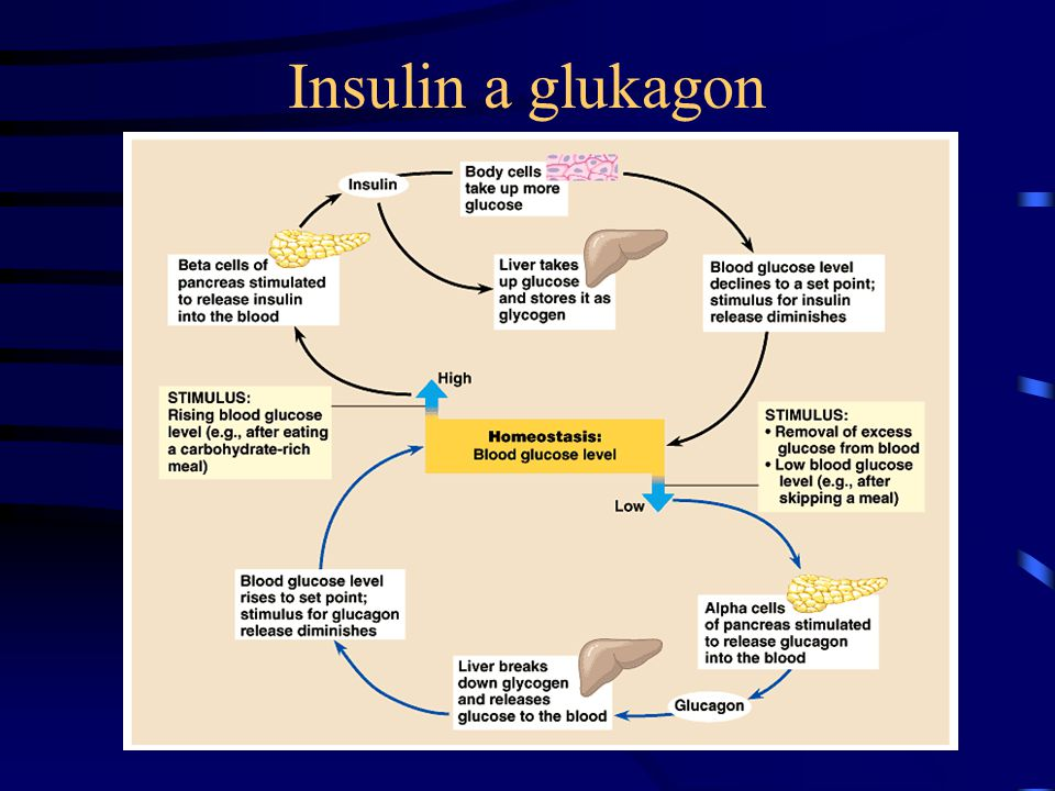 Insulin a glukagon