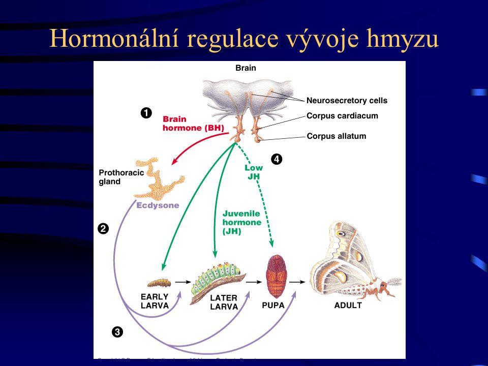 Hormonální regulace vývoje hmyzu