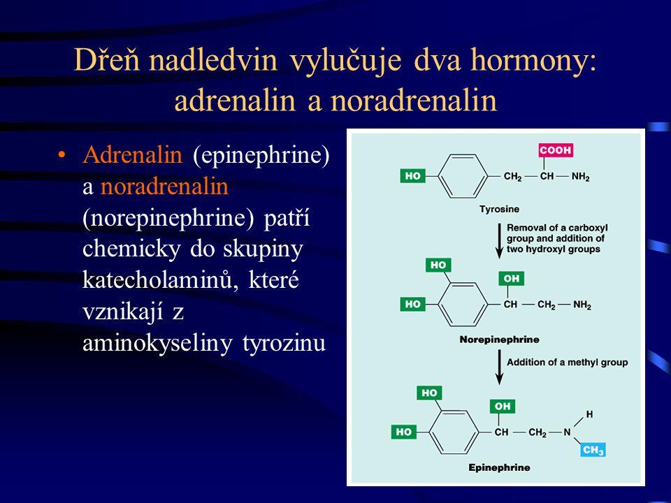 Dřeň nadledvin vylučuje dva hormony: adrenalin a noradrenalin