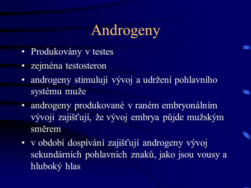 Androgeny Produkovány v testes zejména testosteron