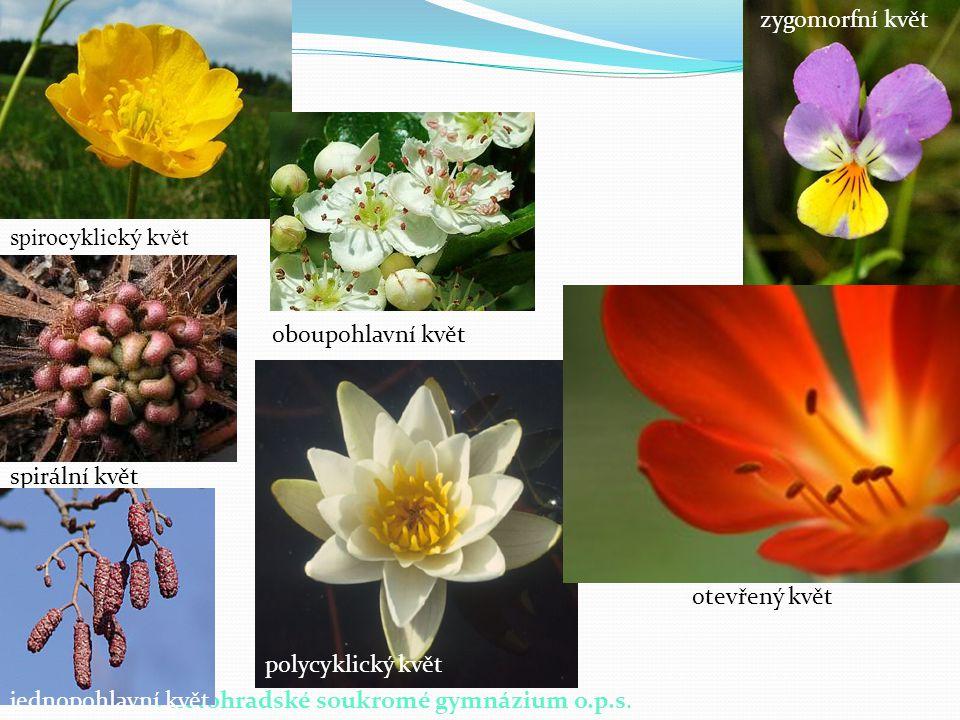 zygomorfní květ spirocyklický květ. oboupohlavní květ. spirální květ. otevřený květ. polycyklický květ.