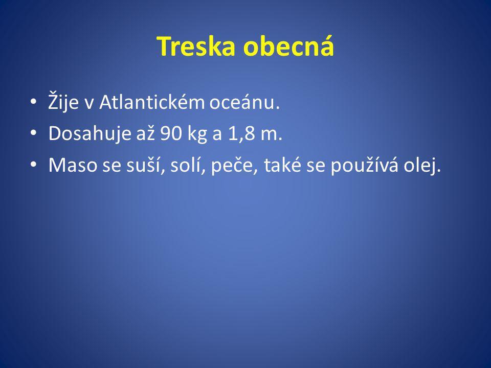 Treska obecná Žije v Atlantickém oceánu. Dosahuje až 90 kg a 1,8 m.