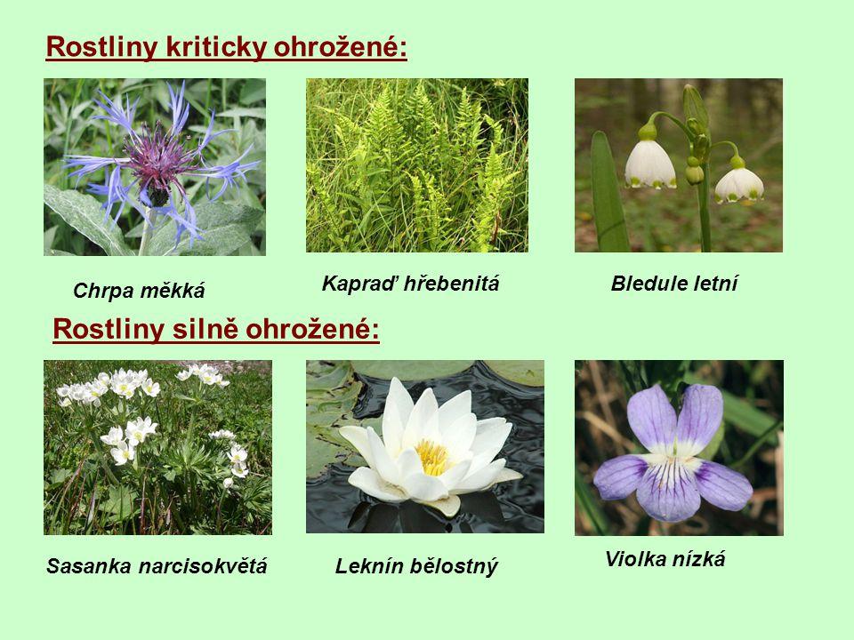 Rostliny kriticky ohrožené: