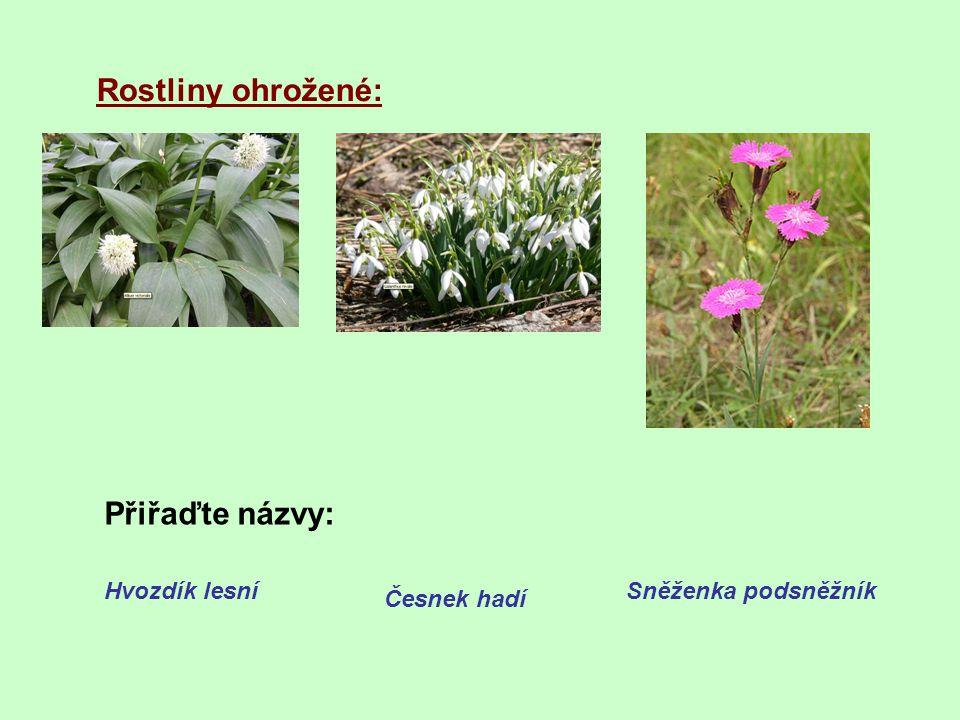 Rostliny ohrožené: Přiřaďte názvy: Hvozdík lesní Sněženka podsněžník