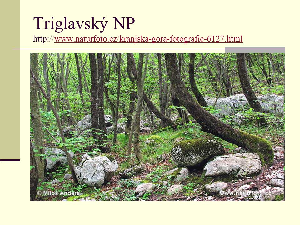 Triglavský NP http://www. naturfoto. cz/kranjska-gora-fotografie-6127