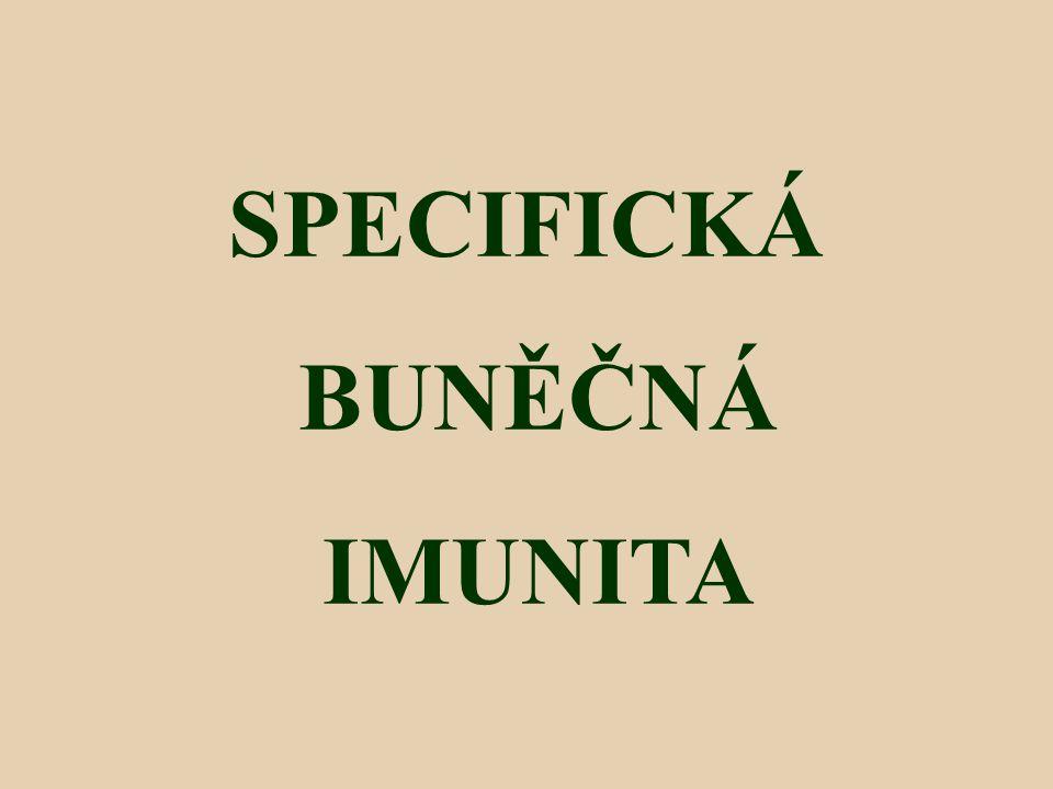SPECIFICKÁ BUNĚČNÁ IMUNITA