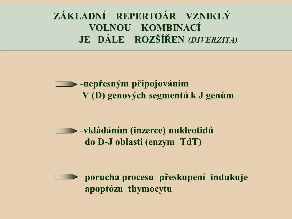 ZÁKLADNÍ REPERTOÁR VZNIKLÝ JE DÁLE ROZŠÍŘEN (DIVERZITA)