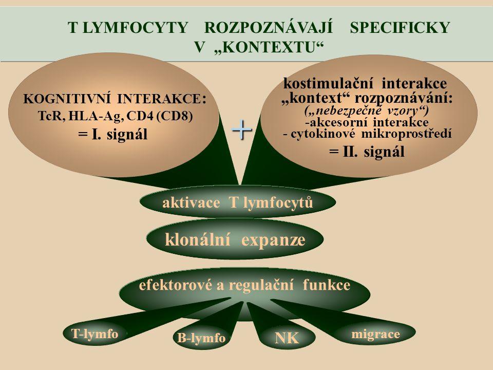 """+ klonální expanze T LYMFOCYTY ROZPOZNÁVAJÍ SPECIFICKY V """"KONTEXTU"""