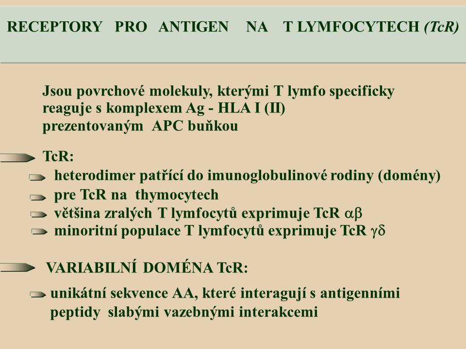 RECEPTORY PRO ANTIGEN NA T LYMFOCYTECH (TcR)