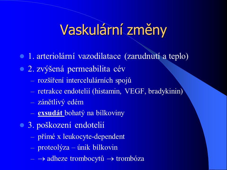 Vaskulární změny 1. arteriolární vazodilatace (zarudnutí a teplo)