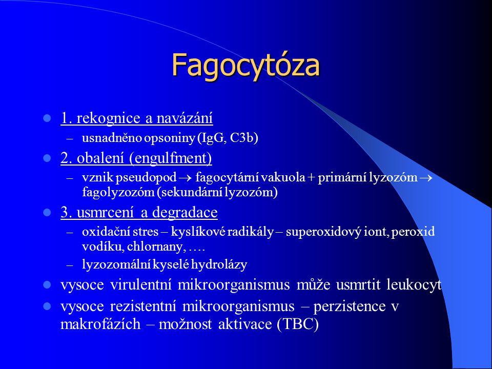 Fagocytóza 1. rekognice a navázání 2. obalení (engulfment)