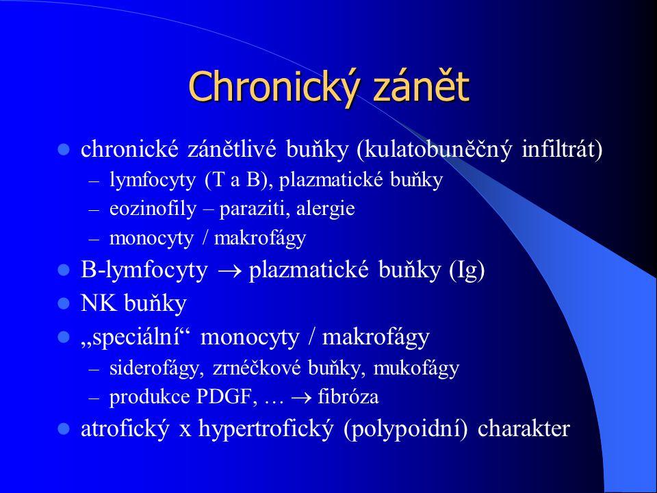Chronický zánět chronické zánětlivé buňky (kulatobuněčný infiltrát)