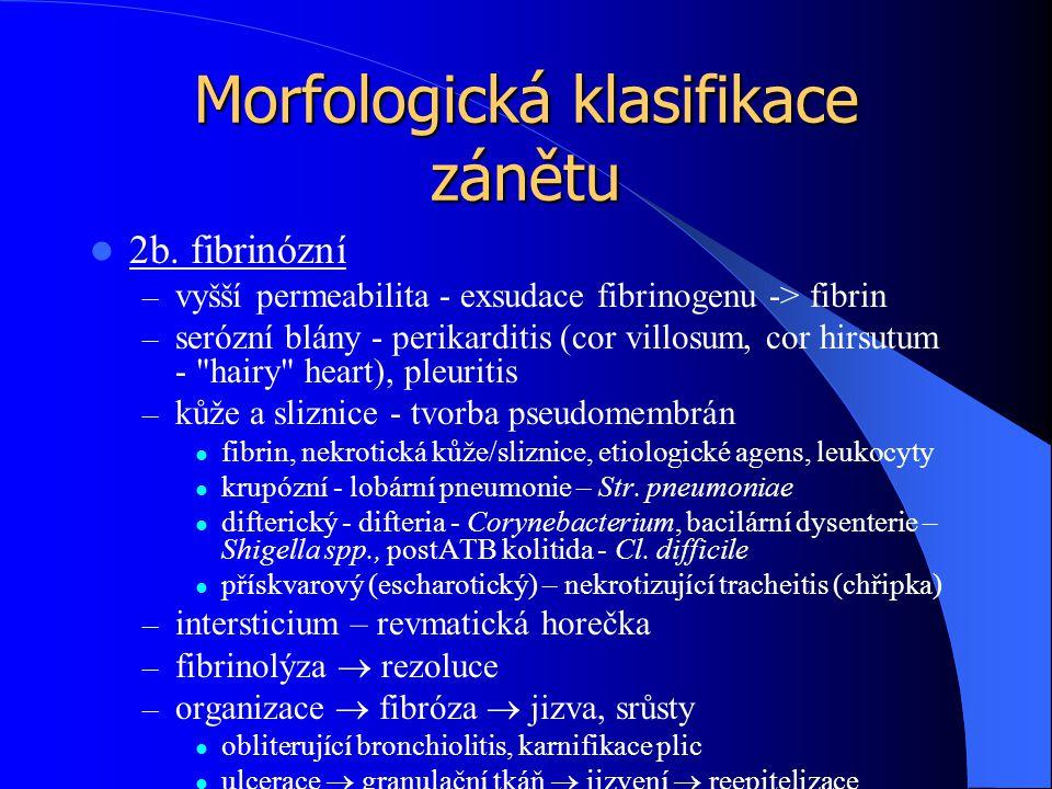 Morfologická klasifikace zánětu