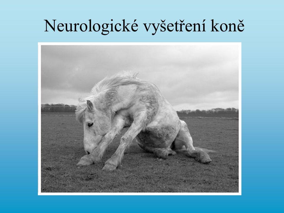 Neurologické vyšetření koně