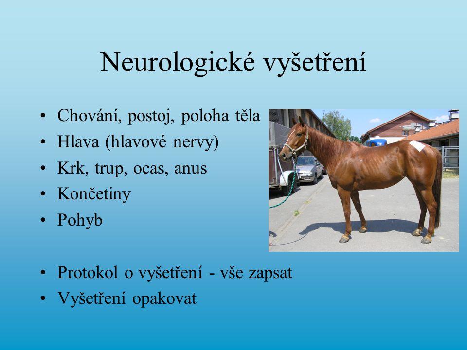 Neurologické vyšetření
