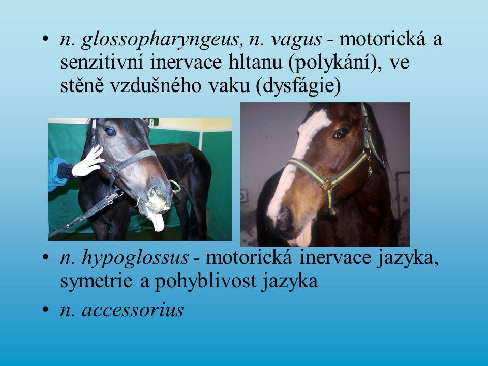 n. glossopharyngeus, n. vagus - motorická a senzitivní inervace hltanu (polykání), ve stěně vzdušného vaku (dysfágie)