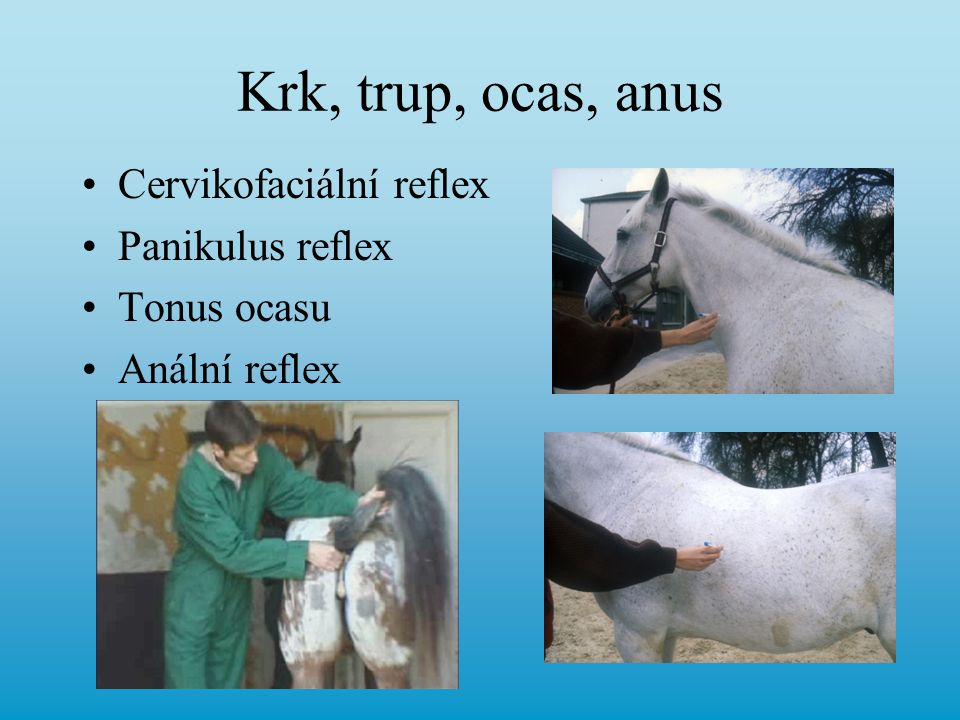 Krk, trup, ocas, anus Cervikofaciální reflex Panikulus reflex