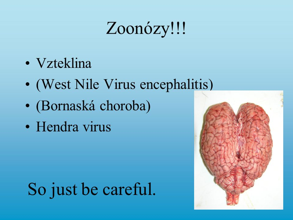 Zoonózy!!! So just be careful. Vzteklina