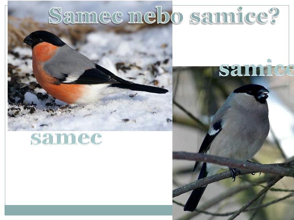 Samec nebo samice samice samec